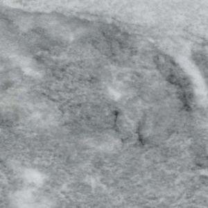 GRIS DE SAVOIE AZEROBACT